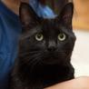 人間大好き、甘えん坊の黒猫 喜希くんです サムネイル2