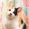 三毛猫の「みなづき 水無(みな)」です
