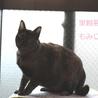 さび猫もみじちゃん里親募集 サムネイル6
