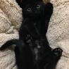 甘えっ子の黒猫☆テック2ヶ月半