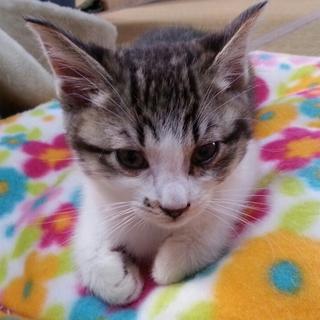 保護子猫の里親さんを募集します!