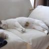 猫に友好的なおっとりお兄ちゃん【のん♂】