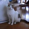猫に友好的なおっとりお兄ちゃん【のん♂】 サムネイル3