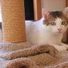 猫に友好的なおっとりお兄ちゃん【のん♂】 サムネイル4