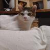 猫に友好的なおっとりお兄ちゃん【のん♂】 サムネイル6