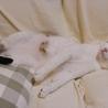 猫に友好的なおっとりお兄ちゃん【のん♂】 サムネイル5