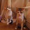 猫に友好的なおっとりお兄ちゃん【のん♂】 サムネイル7