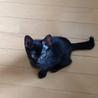 ★幸せのカギ尻尾!凛々しい黒猫旬(しゅん)くん★ サムネイル5