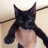 ★肺炎にも勝った!生命力の強い黒猫類(るい)くん★
