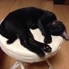 ★幸せのカギ尻尾!凛々しい黒猫旬(しゅん)くん★ サムネイル4