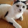 愛知県。成猫の里親さん募集中! サムネイル2
