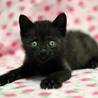 幸運のカギしっぽ 黒猫ヤンくん