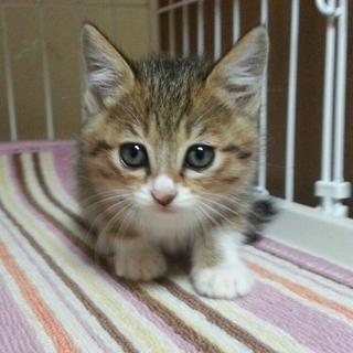 保護子猫の、里親さんを募集します!