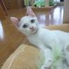 ピコくん 落ち着きのある人懐こい子猫