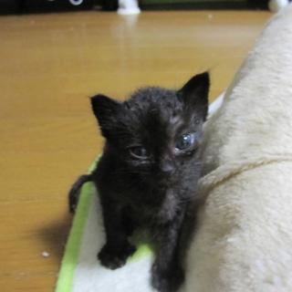 とても小柄です 黒猫ぱこちゃん 動画あります