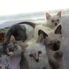 お洒落な仔猫たち♪