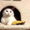 【白猫シロウちゃん 】福島で保護されました サムネイル6