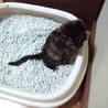 生後推定一ヶ月半のサビ猫姉妹