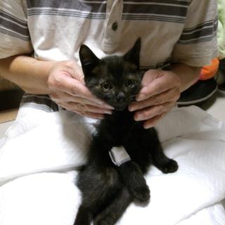 黒ちゃん子猫♥ベル♥男の子2か月