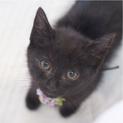黒猫母が勝手口に連れて現れた5匹の兄妹黒子猫。