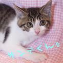 引越で棄てられた美姉妹猫4匹から子猫が13匹。