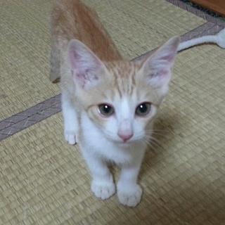 保護子猫の、里親さん募集!