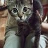 遊びた盛りの子猫ちゃん。