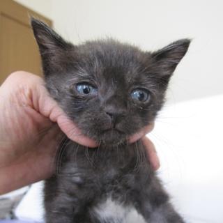 ぽてぽての黒猫 うるるちゃん 1ヶ月