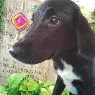 Eコッカーと四国犬のミックスの子犬です。