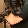 6月17日生 ドーベルマン×ピットブルの仔犬