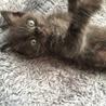 黒猫の子猫ちゃん里親募集