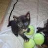 サビ猫 7月13日生まれ