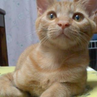 かわいいちび太☆男の子☆猫も人も大好き