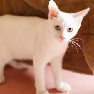 真っ白で目がブルーの4ヶ月の兄弟
