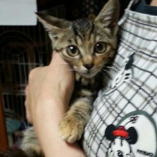 保護子猫の里親さんを募集してます!