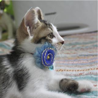 引っ越しで棄てられた母猫が産んだ子猫たち<大阪府>