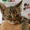 かわいい子猫の里親お願いします。