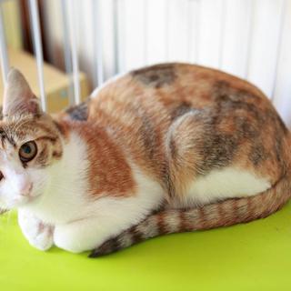 4ヶ月くらいの三毛猫