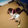 『ビリー』人も犬も大好きでフレンドリーな子です サムネイル6
