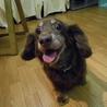 『ビリー』人も犬も大好きでフレンドリーな子です サムネイル5