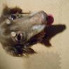 『ビリー』人も犬も大好きでフレンドリーな子です サムネイル4