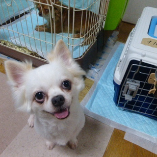 『ナルシェ』かなり甘えん坊。犬とも遊びます。