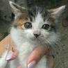 野良猫の赤ちゃんの里親募集!!
