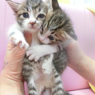 動物愛護センターより保護された2匹です。
