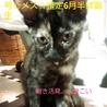 サビ・メス3.5ヶ月仔猫の里親様になって下さい