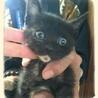 ふわふわのちょこんとした黒ネコちゃん♪