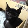 超美人の黒ネコちゃん!