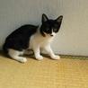野良猫から生まれた子猫の里親募集(子猫B子)