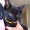 おっとり黒猫「ラベンダー」ちゃん