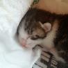 生まれたての子猫です!